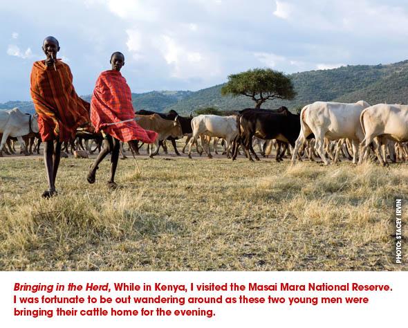 """Bringing in the Herd"""