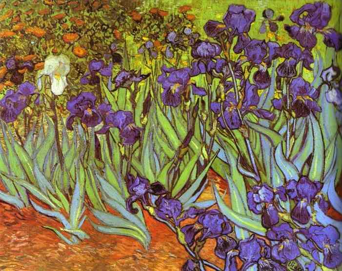 Vincent Van Gogh's Irises (1889)