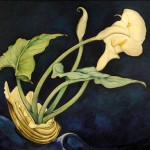 harles Demuth (1883-1937), Calla Lilies, 1927, photographed by Anthony Scarlati