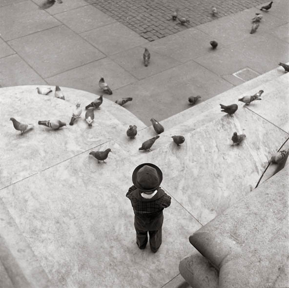 """Boy & Pigeons, this was taken at the New york Public Library on 5th avenue. the little boy is so completely enthralled by the pigeons, and the large stone buttress emphasizes his diminutiveness.enough"""" and then moving onward. currently, Lerner's projects are floral still lifes, motion studies, and a"""