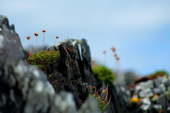Iain Zwiebel: This photo was taken when I was climbing a large rock in Scotland. I had just pulled myself up and over the edge of the rock and I noticed the flowers ahead of me. It was the perfect composition, so I knew I needed the shot.