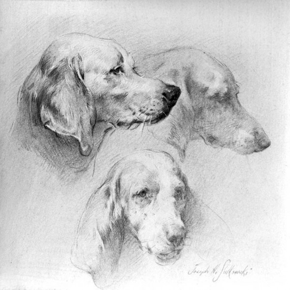 "Hound head studies for expressions, Black chalk on rag paper, 10"" x 12"""
