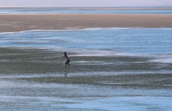 Michelle Campanis: I was camping in Oregon and driving on a small gravel road between Cape Lookout and Cape Meares when I saw this solitary woman clamming in a vast marsh. I was struck by her power and grace as she was striding through the water. There were several cranes in the marsh - the woman looked like she could be another type of lovely bird. The lighting and varied textures of the water made the whole scene look almost like a painting so I pulled over in the dirt and set up my tripod on the side of the road and followed her progress through the marsh.