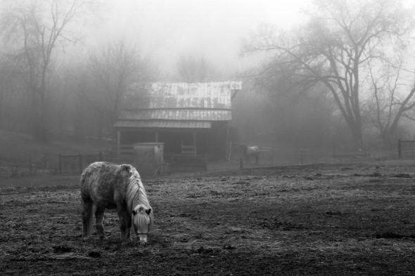 Photograph by Anita Merriam