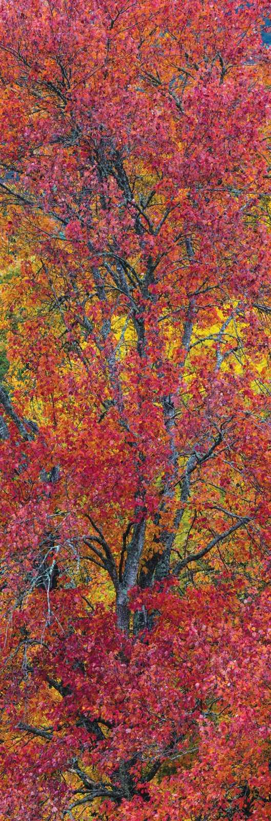 Autumns Ember 297
